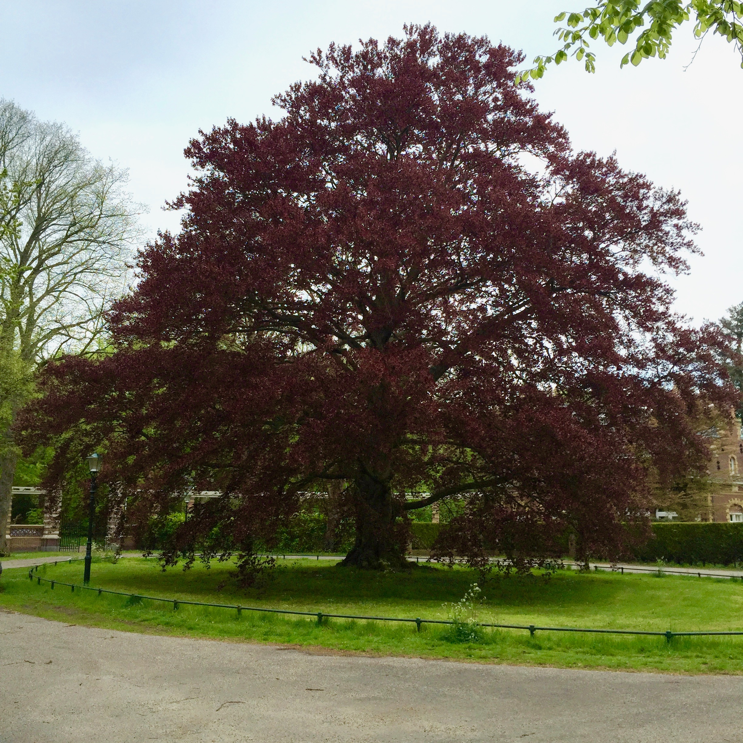 Tree in Wassenaar